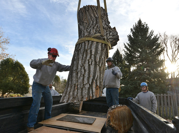 Dennis Shea, left,  owner of Arbortec tree service with Adam Stagner and Brian Toth load a 1,500 lb. section of a 92 year old cottonwood tree in Westlake rescuing two honeybee hives containing 80,000 honey bees in Westlake.<br /> November 27, 2012<br /> staff photo/ David R. Jennings