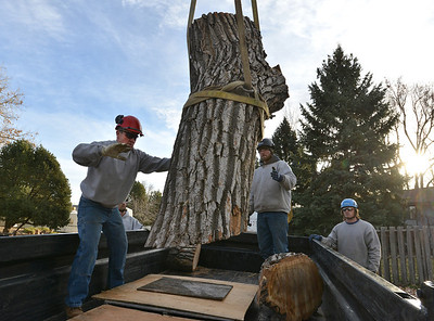 Dennis Shea, left,  owner of Arbortec tree service with Adam Stagner and Brian Toth load a 1,500 lb. section of a 92 year old cottonwood tree in Westlake rescuing two honeybee hives containing 80,000 honey bees in Westlake. November 27, 2012 staff photo/ David R. Jennings