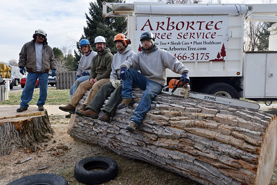 Veloy Sandoval, left, Brain Toth, Grant Lauer, Mary Plaskett and Adam Stagner with Arbortec tree service pose for pictures on the base section of a 92 year old cottonwood tree along King Circle on Tuesday The team rescued two honeybee hives containing 80,000 honey bees from the tree. November 27, 2012 staff photo/ David R. Jennings