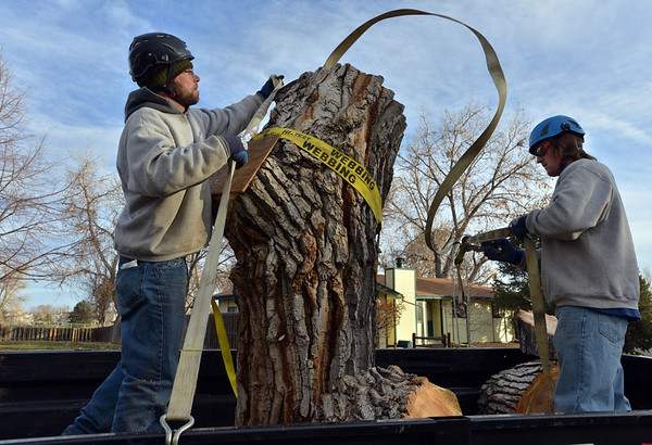 Adam Stagner, left, and Brian Toth with Arbortec tree service strap a 1,500 lb. section of a 92 year old cottonwood tree on to a trailer rescuing two honeybee hives containing 80,000 honey bees.<br /> November 27, 2012 in Westlake.<br /> staff photo/ David R. Jennings