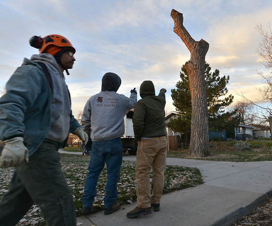 Arborists with Arbortec tree service prepare to cut sections of a 92 year old cottonwood tree along King Circle on Tuesday, rescuing two honeybee hives containing 80,000 honey bees in Westlake.<br /> November 27, 2012<br /> staff photo/ David R. Jennings