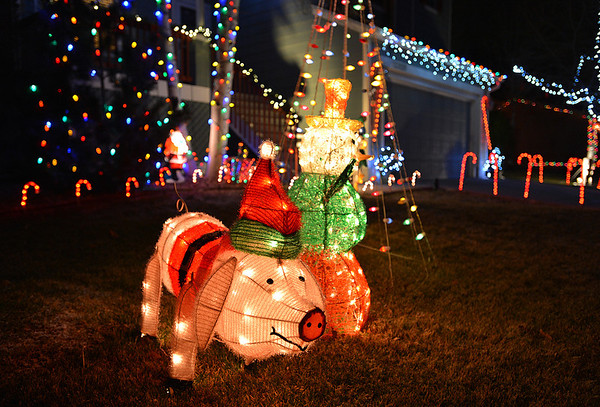 A pig is one part of the holiday lighting display at 12326 Wolff Dr. in Broomfield.<br /> December 6, 2012<br /> staff photo/ David R. Jennings