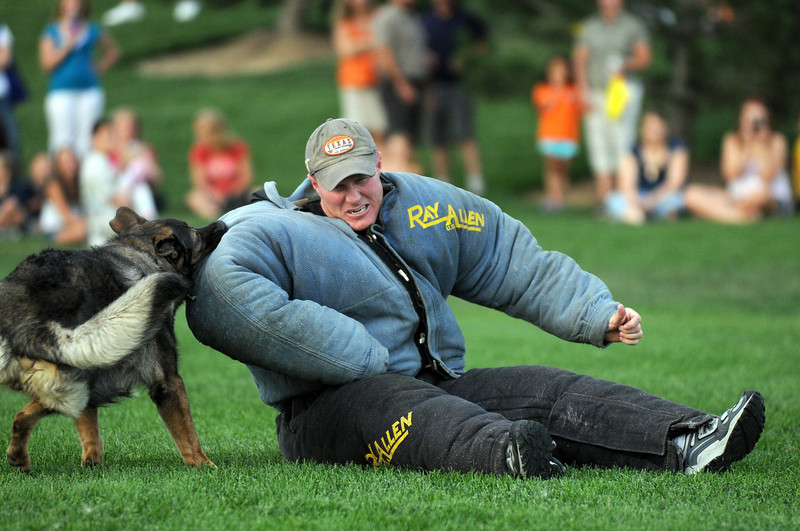 Broomfield Police officer Adrian Peech acts the part of a criminal being subdued by  police dog Aron during National Night Out at County Commons Park on Tuesday.<br /> <br /> <br /> <br /> August 4, 2009<br /> staff photo/David R. Jennings