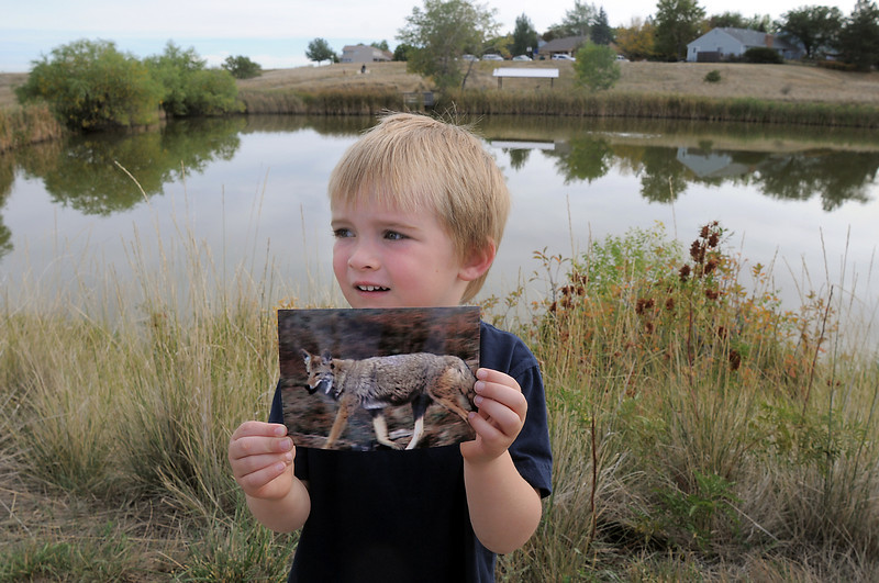 Henry Thompson, 4, shows a photograph of a coyote he found as a prop for the Broomfield Nature Program at Josh's Pond on Wednesday.<br /> October 5, 2011<br /> staff photo/ David R. Jennings