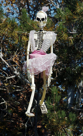 A skeleton hangs in the trees of 13941 Tin Cup Circle ,on Thursday, as part of the house decorations for Halloween.<br /> <br /> October 22, 2009<br /> Staff photo/David R. Jennings