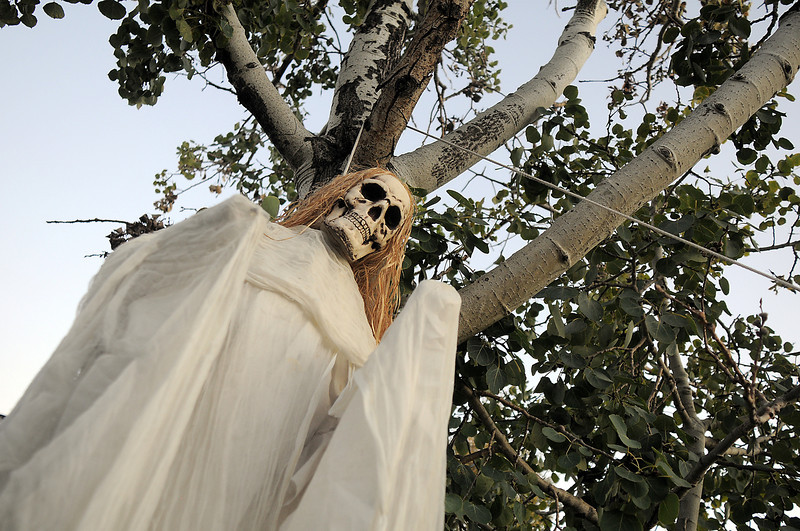 "A skeleton hung in a tree at the entrance to Jim O'Dell's Halloween  haunted house dubbed "" The Chilling Hour""  at 920 Coral St. on Wednesday.  <br /> October 19, 2011<br /> staff photo/ David R. Jennings"