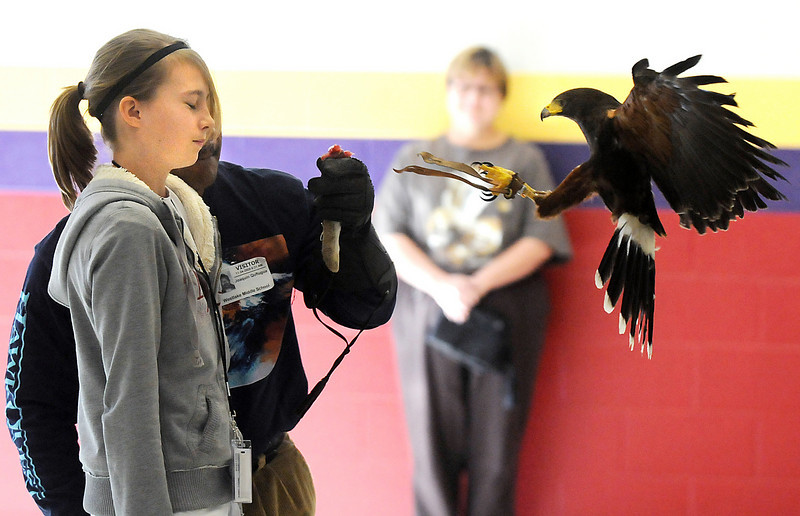 Taylor Makowski, left, gets a prey's perspective as a Harris Hawk flies to the gloved arm of HawkQuest master falconer Kin Quitugua during his presentation to Westlake Middle School 6th graders in the Wolf Pack Corps.<br /> <br /> November 24, 2009<br /> Staff photo/David R. Jennings