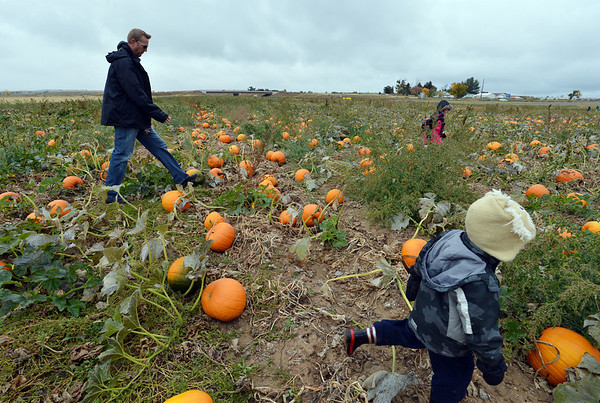 The George family, Adam, left, Will, 3, right and McKenna, 6, look for pumpkins in a field at the Rock Creek Farm on Saturday.<br /> October 6, 2012<br /> staff photo/ David R. Jennings