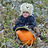 Will George, 3, sits on a pumpkin he liked in a field at the Rock Creek Farm on Saturday.<br /> October 6, 2012<br /> staff photo/ David R. Jennings