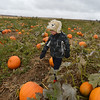 Will George, 3, looks for the pumpkin he likes in  a field at the Rock Creek Farm on Saturday.<br /> October 6, 2012<br /> staff photo/ David R. Jennings