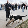 "Retiring Broomfield Police officer Jason Collins watches his K-9 dog Nik carry a bite sleeve after taking a ""last bite"" on the arm of Chief Tom Deland during the ceremony in front of police headquarters on Wednesday.<br /> <br /> December 1, 2010<br /> staff photo/David R. Jennings"
