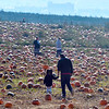 bent1017pumpkins14