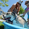 Michal Rath, left, and Tatum Hughes, 10, give Hooch, an Old English bulldog, a bath during the Salon Tao's dog wash to benefit local dogs on Saturday.<br /> <br /> <br /> July 21, 2012<br /> staff photo/ David R. Jennings