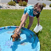 Tatum Hughes, 10, holds on to her family's dog, Anna Bell a long haired Dachshund, in the pool during the Salon Tao's dog wash to benefit local dogs on Saturday.<br /> <br /> July 21, 2012<br /> staff photo/ David R. Jennings
