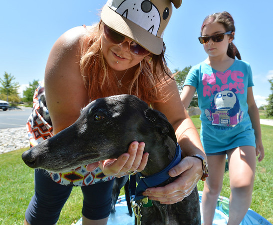 Cameo a greyhound owned by alvina Vasquez, is comforted by Tracy Owen, left, and Tatum Hughes, 10, while getting washed during the Salon Tao's dog wash to benefit local dogs on Saturday.<br /> July 21, 2012<br /> staff photo/ David R. Jennings
