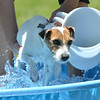 Dixie a Jack Russell Terrier owned by Marci Grebing, gets in a pool for her wash during the Salon Tao's dog wash to benefit local dogs on Saturday.<br /> <br /> July 21, 2012<br /> staff photo/ David R. Jennings