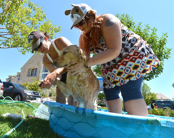 Sadie, owned by the Kaiser family, gets shampooed  by Tracy Owen and Michal Rath during the Salon Tao's dog wash to benefit local dogs on Saturday.<br /> July 21, 2012<br /> staff photo/ David R. Jennings