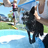 Blackie owned by Joe Mahoney, gets rinsed by Tatum Hughes, 10, while being held by Tracy Owen during the Salon Tao's dog wash to benefit local dogs on Saturday.<br /> <br /> July 21, 2012<br /> staff photo/ David R. Jennings
