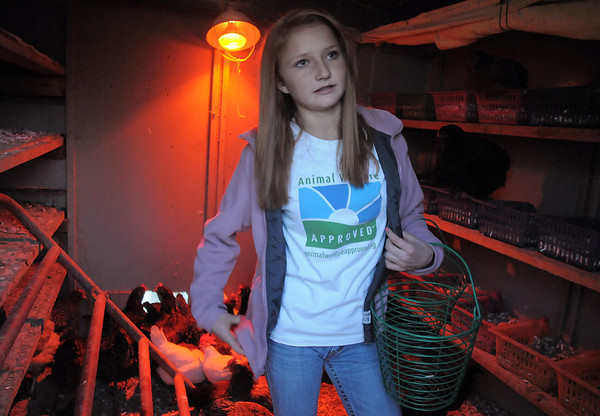 "Shelby Grebenc, 12, prepares to gather eggs from 130 chickens for her business ""Shelby's Happy Chapped Chicken Butt Farm"" at the family's home of 4 acres in Broomfield on Thursday. Grebenc is the youngest person to be certified as an Animal Welfare Approved chicken farm.<br /> For more photos please see  <a href=""http://www.broomfieldenterprise.com"">http://www.broomfieldenterprise.com</a><br /> January 19, 2012<br /> staff photo/ David R. Jennings"
