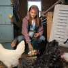 "Shelby Grebenc, 12, gathers eggs from 130 chickens for her business ""Shelby's Happy Chapped Chicken Butt Farm"" at the family's home of 4 acres in Broomfield on Thursday. Grebenc is the youngest person to be certified as an Animal Welfare Approved chicken farm.<br /> For more photos please see  <a href=""http://www.broomfieldenterprise.com"">http://www.broomfieldenterprise.com</a><br /> January 19, 2012<br /> staff photo/ David R. Jennings"
