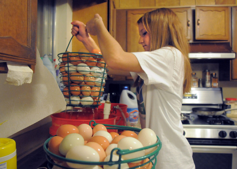 """Shelby Grebenc, 12, washes eggs from her 130 chickens for her business """"Shelby's Happy Chapped Chicken Butt Farm"""" at her home on 4 acres in Broomfield on Thursday. Grebenc is the youngest person to be certified as an Animal Welfare Approved chicken farm.<br /> For more photos please see  <a href=""""http://www.broomfieldenterprise.com"""">http://www.broomfieldenterprise.com</a><br /> January 19, 2012<br /> staff photo/ David R. Jennings"""