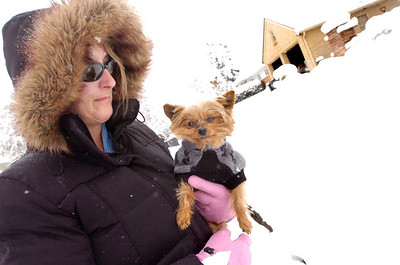 "SNOW73.JPG  Melissa Dakis takes Gizmo out for a ""walk"" on Thursday morning in Boulder. Dakis says her 13-year-old miniture Yorkshire Terrier doesn't like the cold weather and snow. Photo by Paul Aiken The Camera Oct 29 2009"