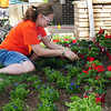 Home Depot employee Sarah Strain plants flowers at the entrance of the Broomfield Veterans Memorial Museum on Thursday. <br /> <br /> May 17, 2012 <br /> staff photo/ David R. Jennings