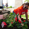 Home Depot employees Bridget Thiel, hands at left, and Sarah Strain plant flowers at the entrance of the Broomfield Veterans Memorial Museum on Thursday. <br /> <br /> May 17, 2012 <br /> staff photo/ David R. Jennings