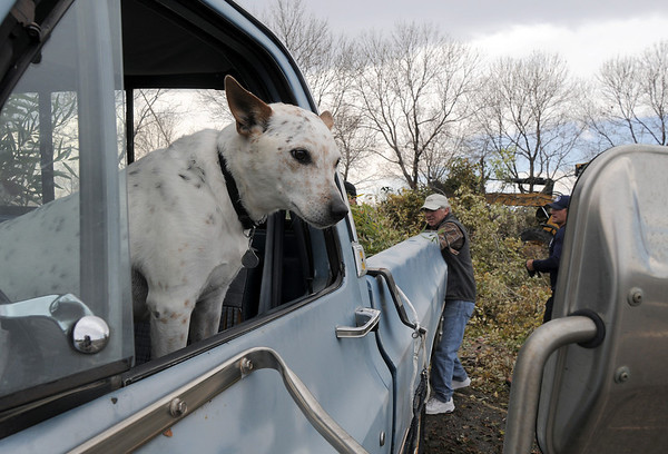 A dog watches Broomfield residents unload their broken branches at the temporary tree branch drop off in the parking lot of the Bay Aquatic Center on Saturday.<br /> October 29, 2011<br /> staff photo/ David R. Jennings