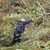 A Broomfield resident unloads broken branches at the temporary tree branch drop off in the parking lot of the Bay Aquatic Center on Saturday.<br /> October 29, 2011<br /> staff photo/ David R. Jennings