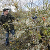Ryan Hartsoch, 18, unloads a trailer full on broken branches at the temporary tree branch drop off in the parking lot of the Bay Aquatic Center on Saturday.<br /> October 29, 2011<br /> staff photo/ David R. Jennings