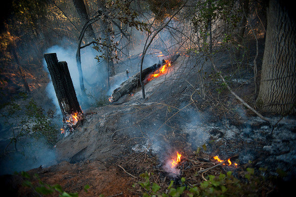 Texas Wildfires.JPEG-06228.JPG Parts of trees and foliage catch flame in a wooded area off of County Road 320 in Anderson County, Texas, Monday, Sept. 5, 2011. The fire in the area near Frankston originally began Thursday and rekindled Saturday morning. Winds have caused many fires to spread and rekindle in the East Texas area.  (AP Photo/The Tyler Morning Telegraph, Sarah A. Miller)