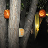 The Anderson family carved foam pumpkins  hung in the front yard tree for their Halloween display on Maria Circle in Brandywine on Thursday. <br /> October 20, 2011<br /> staff photo/ David R. Jennings