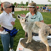 Sheri Hoffman, right, of the City and County of Broomfield Wildlife Master Program gives tips to Cathy Wahl on how to keep racoons out of her garden at the National Trails Day event at the Broomfield Commons on Saturday. Photo by Matt Kelley.