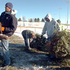Ricky Newton, left, Chuck Gehringer and Josh White, Broomfield Parks put a Christmas trees into the wood chipper at the collection site in Community Park turning the trees into mulch on Thursday<br /> January 12, 2012<br /> staff photo/ David R. Jennings