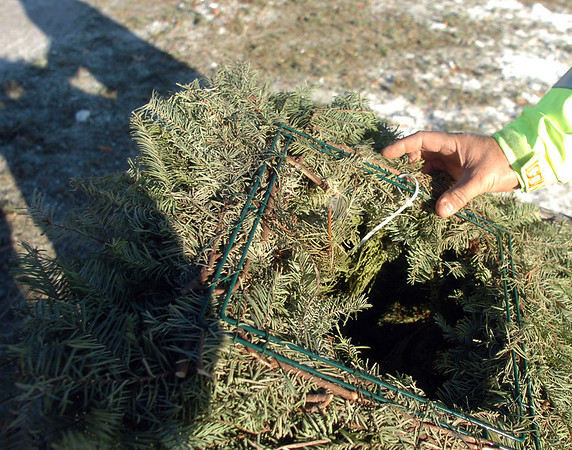 A square wreath found at the tree collection site in Community Park on Thursday can not be recycled due to having wire and string.<br /> January 12, 2012<br /> staff photo/ David R. Jennings
