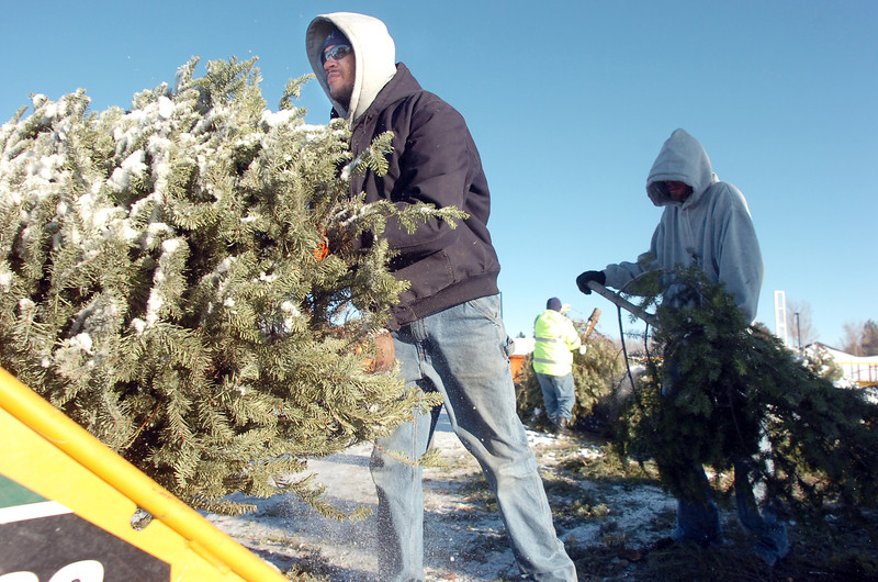 Ricky Newton, left, and Josh White, Broomfield Parks,  place Christmas trees into the wood chipper for mulch at the tree collection site in Community Park on Thursday.<br /> <br /> January 12, 2012<br /> staff photo/ David R. Jennings