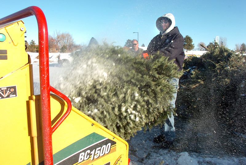 Ricky Newton, Broomfield Parks, puts a Christmas tree to the wood chipper at the tree collection site in Community Park on Thursday. the crew headed by chuck Gehringer chipped 92 trees into mulch.<br /> For more photos please visit broomfieldenterprise.com<br /> January 12, 2012<br /> staff photo/ David R. Jennings