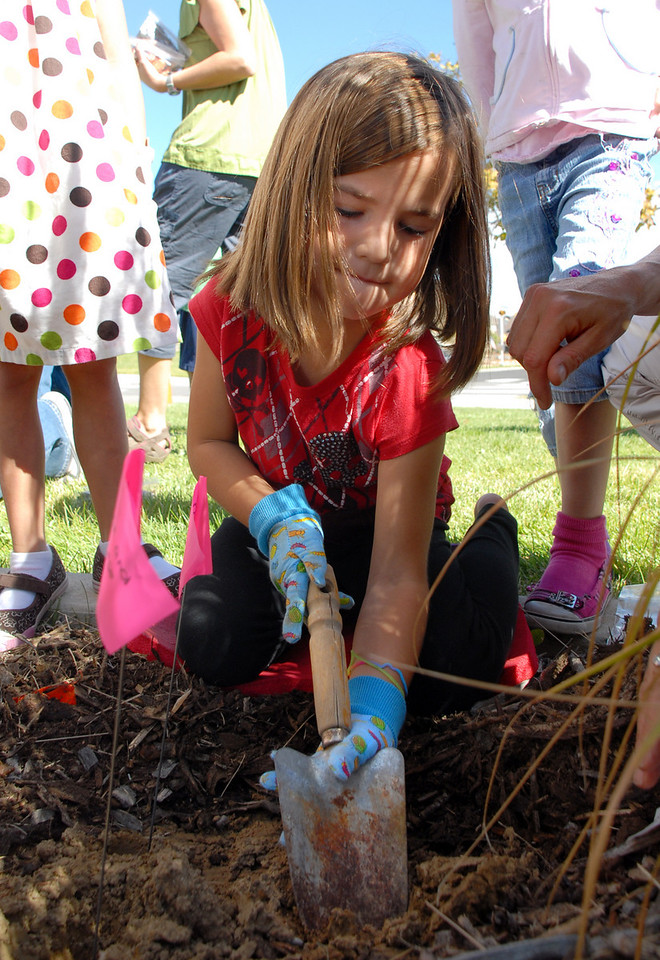 Delany Rutligiano digs a hole for tulip bulbs that the Meridian Elementary first graders are planting at the school on Friday. <br /> October 8, 2010<br /> staff photo/David R. Jennings