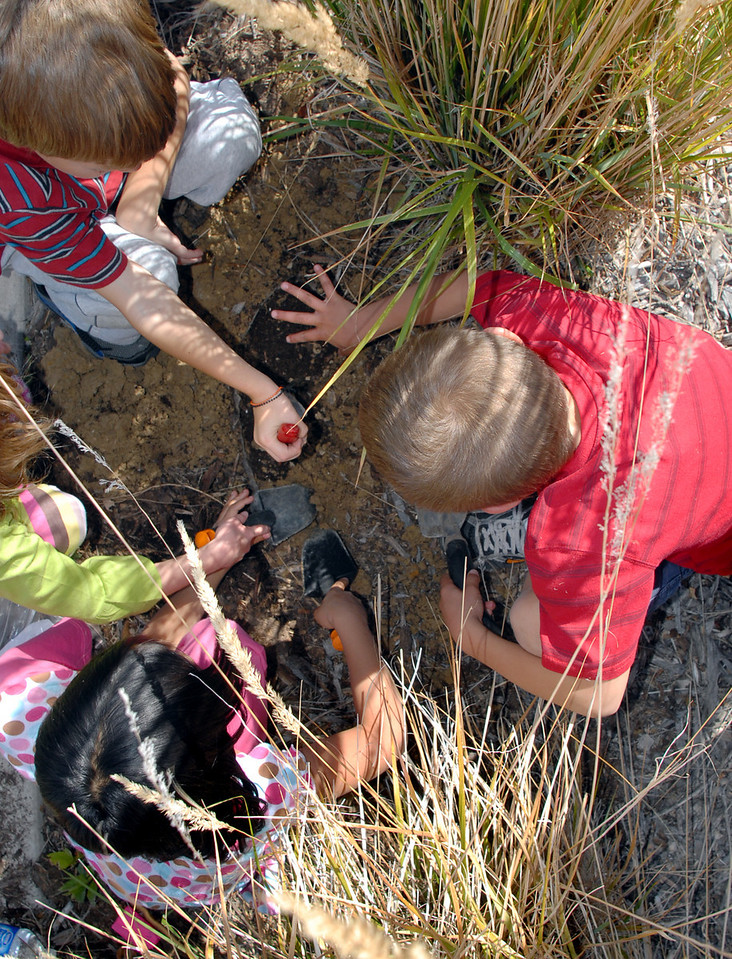 Meridian Elementary first graders plant some of the more than 500 tulips of four different varieties at the school on Friday. <br /> October 8, 2010<br /> staff photo/David R. Jennings