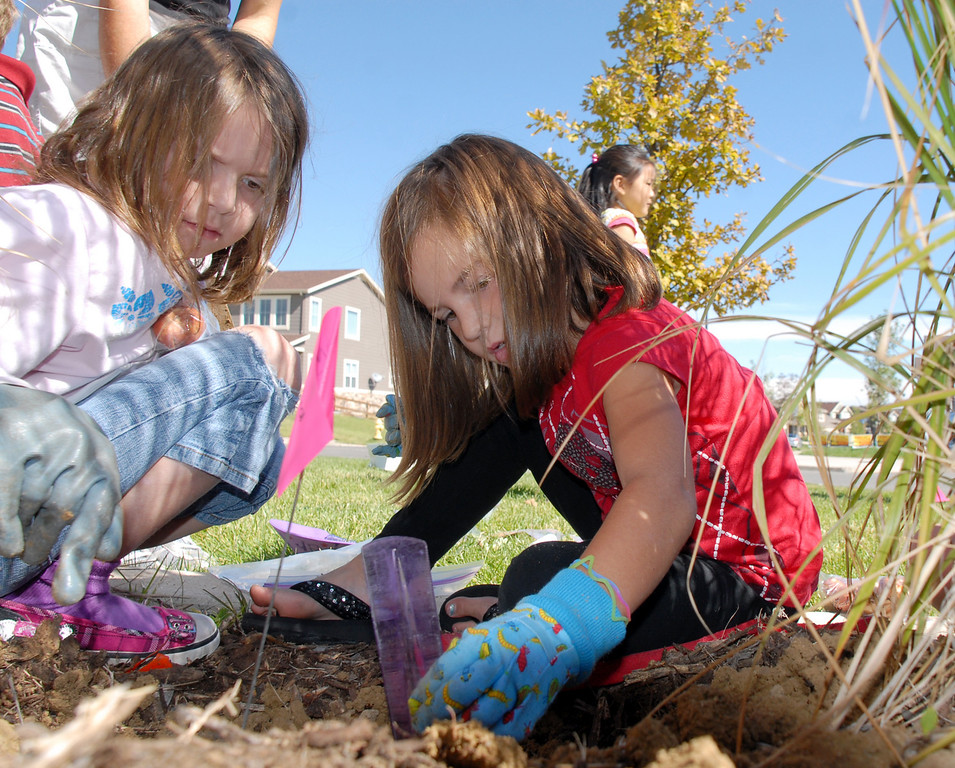 Meridian Elementary first graders Delaney Rutigiano, right, measures the depth of the hole while Alyssa Otterson holds some blubs as they help plant some of the more than 500 tulips of four different varieties at the school on Friday. The tulips are for the Journey North program where children from around the planet to track when tulips from participating schools are planted, when they sprout and bloom. Meridian has partnered with Limpsfield school in Sheffield England for this and other projects.<br /> October 8, 2010<br /> staff photo/David R. Jennings