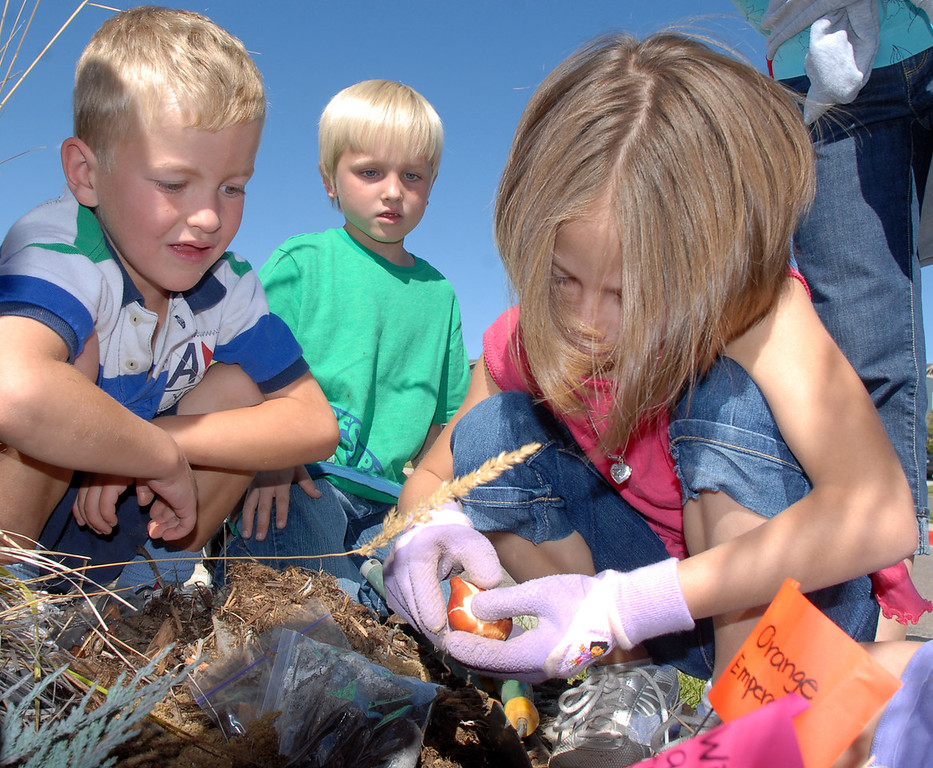 Meridian Elementary first graders Gigi Tedesco, right, plants a bulb as Martin Fischer, left, and Dave Blout wait their turn while help in planting some of the more than 500 tulips of four different varieties at the school on Friday. <br /> October 8, 2010<br /> staff photo/David R. Jennings