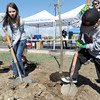 "Katherine Tutt, 11, left, and Seth Roberts, 8, dig up dirt to cover the roots of a newly planted tree  in the area between North Metro Fire Rescue headquarters and Mamie Doud Eisenhower Public LIbrary during the ""Trees for a Healthy Community and Economy"" event on Saturday. <br /> <br /> April 14, 2012 <br /> staff photo/ David R. Jennings"