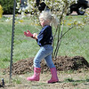 "Isabella Peterson, 3, walks past newly planted trees in the area between North Metro Fire Rescue headquarters and Mamie Doud Eisenhower Public LIbrary during the ""Trees for a Healthy Community and Economy"" event on Saturday. <br /> <br /> April 14, 2012 <br /> staff photo/ David R. Jennings"