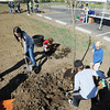 "Katherine Tutt, 11, left, Lyle Roberts, 6, and his brother Seth, 8, help cover the roots of a newly planted tree in the area between North Metro Fire Rescue headquarters and Mamie Doud Eisenhower Public LIbrary during the ""Trees for a Healthy Community and Economy"" event on Saturday. <br /> <br /> April 14, 2012 <br /> staff photo/ David R. Jennings"
