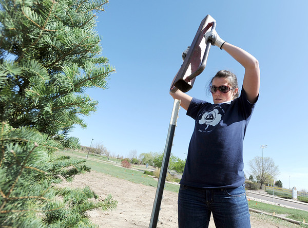 "Layne Schnoor drives stakes to secure a pine tree just planted in the area between North Metro Fire Rescue headquarters and Mamie Doud Eisenhower Public LIbrary during the ""Trees for a Healthy Community and Economy"" event on Saturday. <br /> <br /> April 14, 2012 <br /> staff photo/ David R. Jennings"
