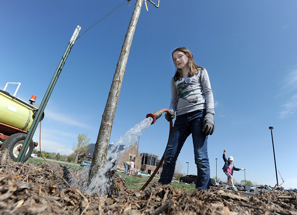 "Katherine Tutt, 11, water freshly planted trees in the area between North Metro Fire Rescue headquarters and Mamie Doud Eisenhower Public LIbrary on Saturday.  About 75 volunteers participated in the tree planting  ""Trees for a Healthy Community and Economy"" event.<br /> <br /> <br /> April 14, 2012 <br /> staff photo/ David R. Jennings"