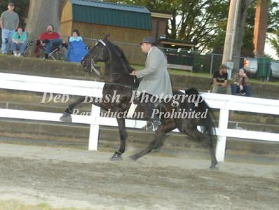 CLASS 30  OPEN WALKING HORSE SPECIALTY