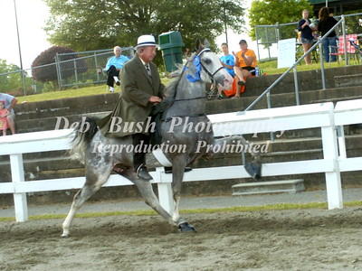 CLASS 17  AMATEUR RIDERS 50 & OVER  SPECIALTY