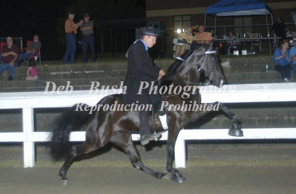 CLASS 27  OPEN SHOW PLEASURE WALKING HORSE SPECIALTY
